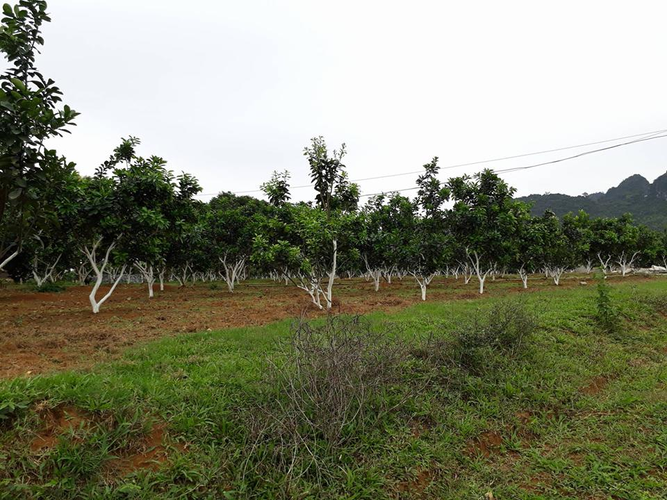 Nông nghiệp công nghệ cao vì sao chưa hấp hẫn?